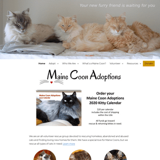 Maine Coon Adoptions – CALIFORNIA-BASED NO-KILL CAT RESCUE