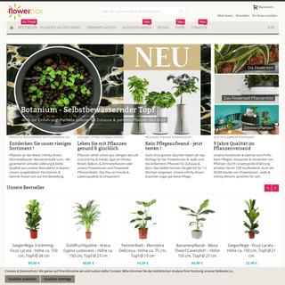 Flowerbox - Infinity-Rosen, Lebende Pflanzenbilder, Zimmerpflanzen, uvm.