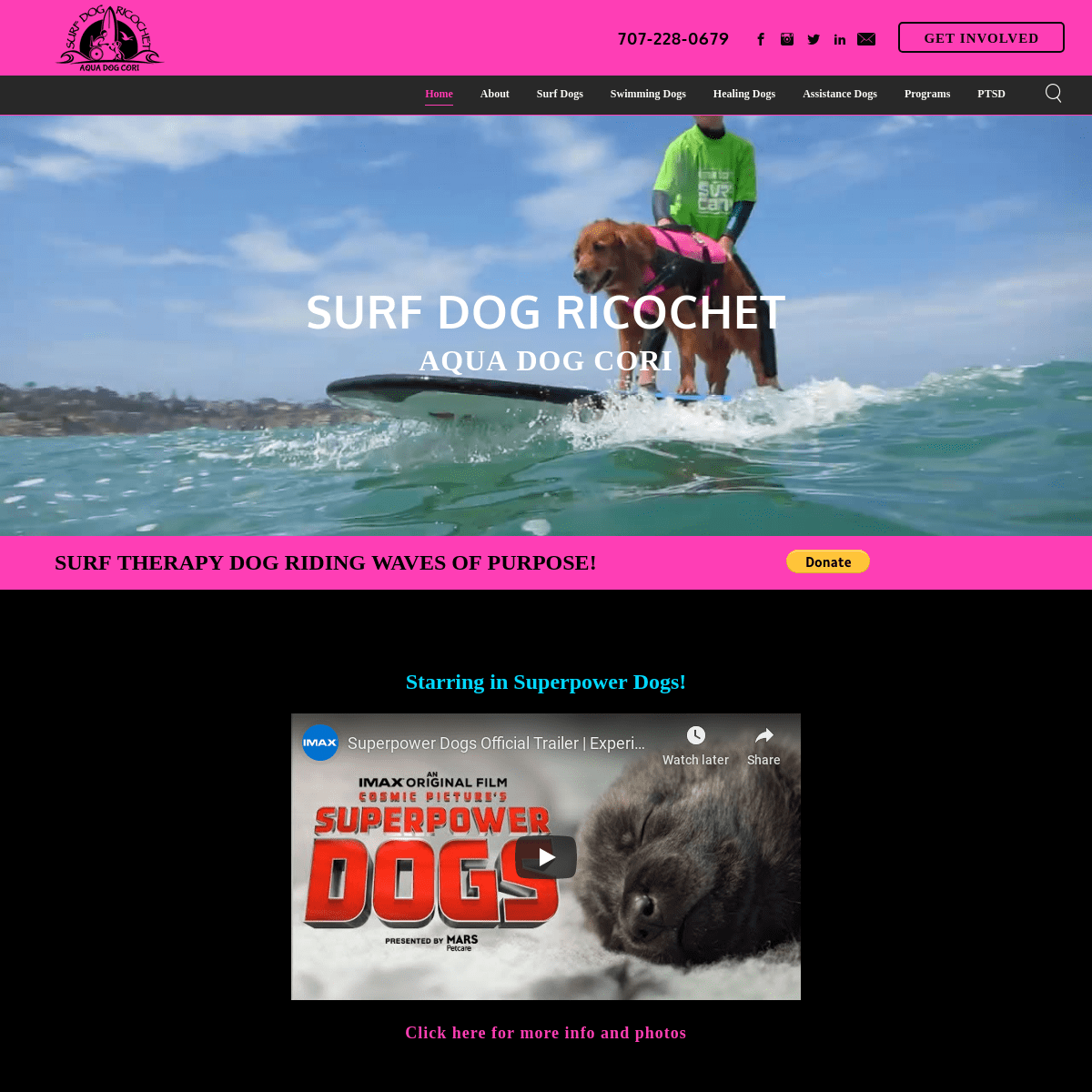 Surf Dog Ricochet - Surfing Dogs Catch Waves of Purpose