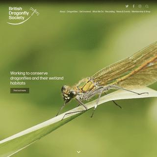 British Dragonfly Society - British Dragonfly Society
