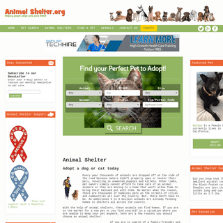 Animal Shelter - Adopt a homeless dog or cat from a local shelter or rescue.