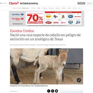Nació una rara especie de caballo en peligro de extinción en un zoológico de Texas - Clarín