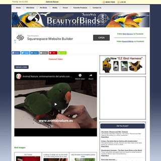 Home page - Beauty of Birds