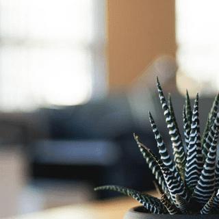 Fiberoptika.net – Interieur Decor Ideeën voor uw Huis Inspiratie