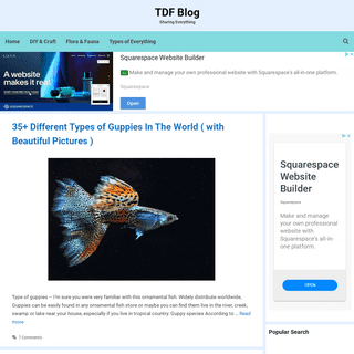 TDF Blog - Sharing Everything