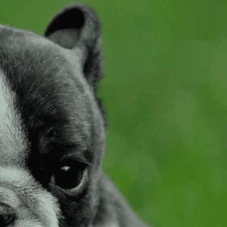 Dog Training, Tips and Tricks - Thatmutt.com