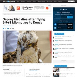 Osprey bird dies after flying 6,948 kilometres to Kenya - Daily Nation