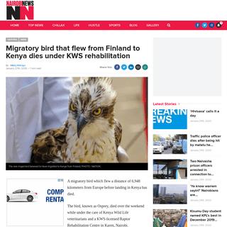 Migratory bird that flew from Finland to Kenya dies under KWS rehabilitation – Nairobi News