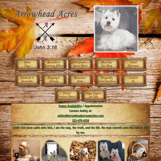 West Highland Terrier Puppies for Sale from Breeder at Arrowhead Acres