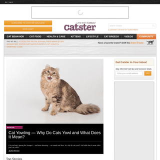 Cats - Catster