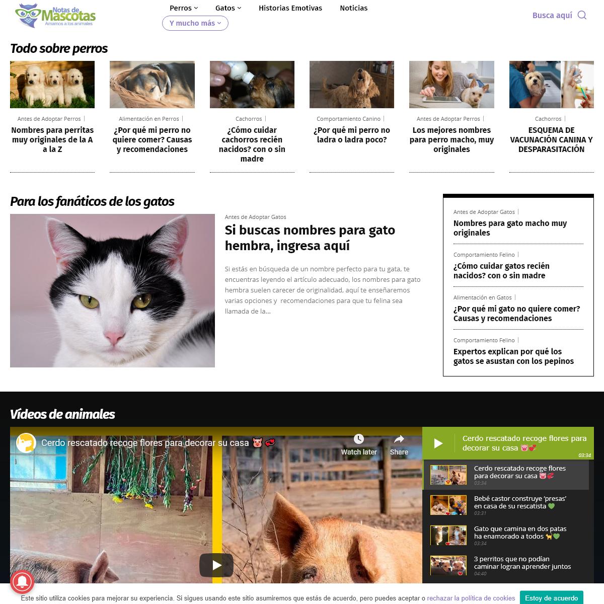 Notas de Mascotas - Todo sobre perros, gatos y más animales