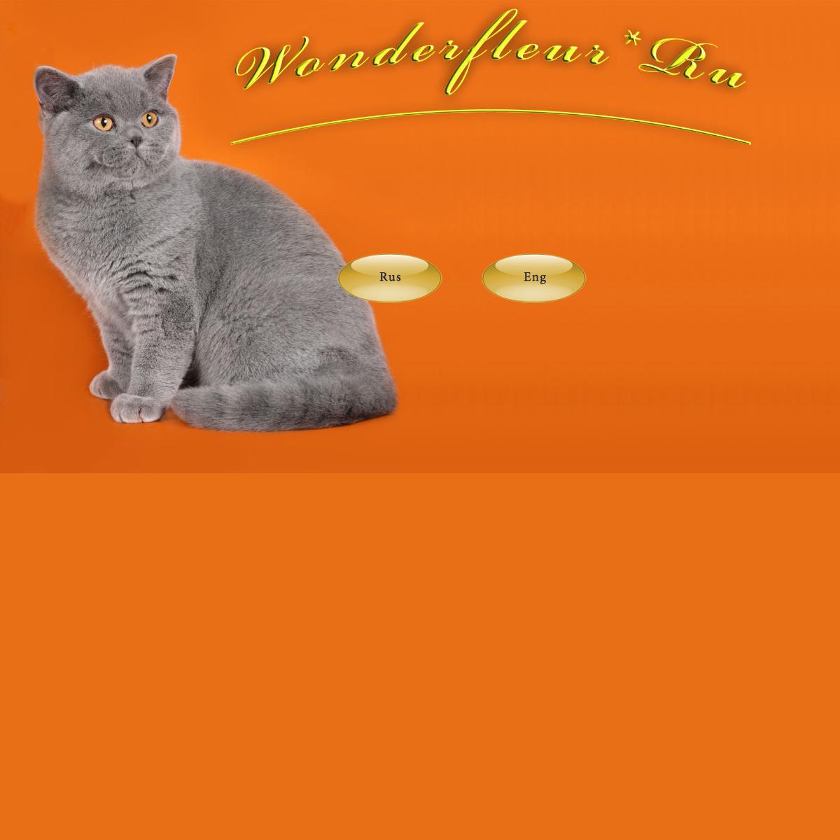 Питомник британских кошек WonderFleur-Ru -- Британские короткошерстные кошк�