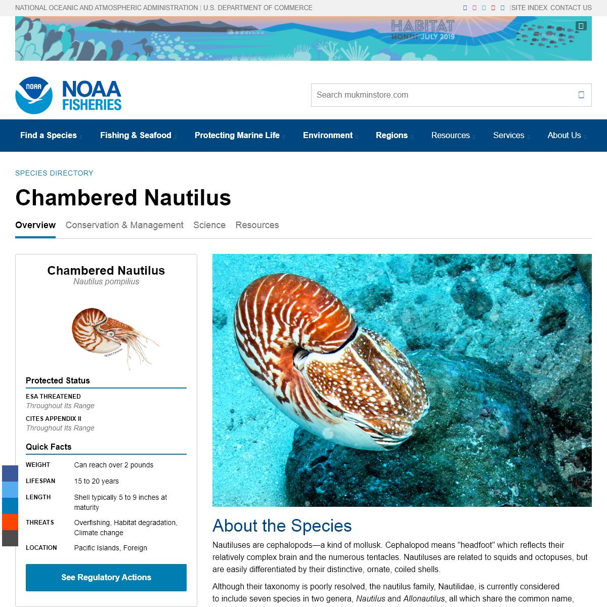 Chambered Nautilus - mukminstore Fisheries