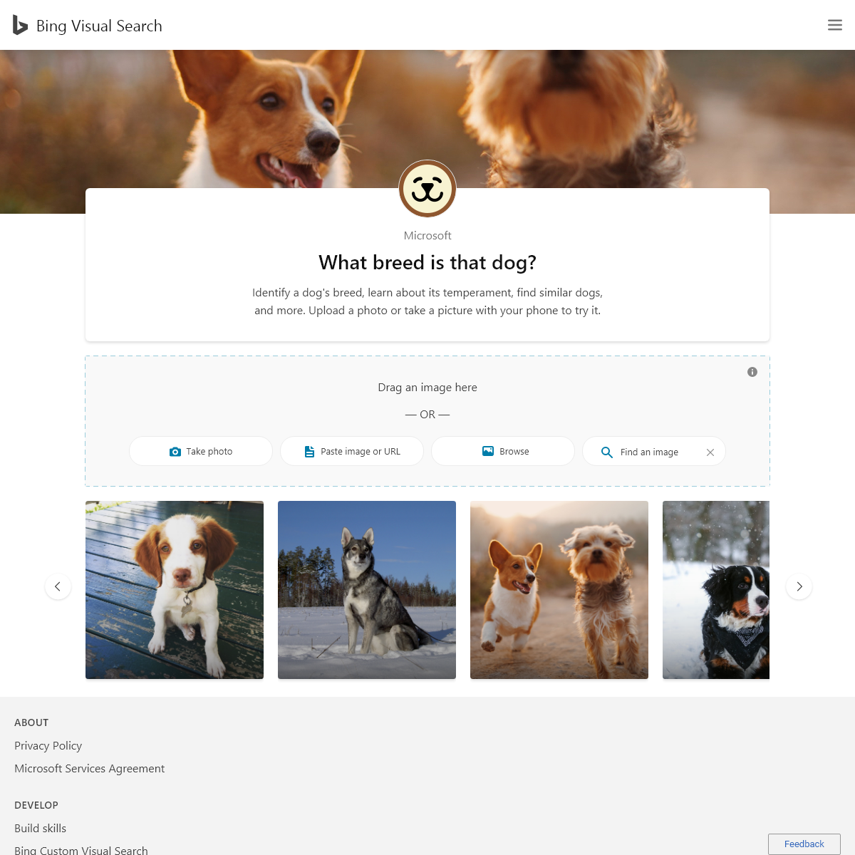 What breed is that dog- - Bing Visual Search
