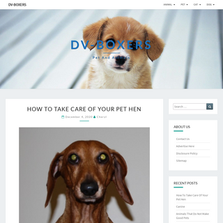 DV-Boxers - Pet and Animals
