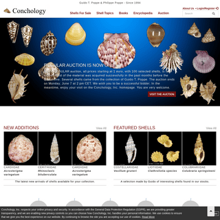 Shells For Sale - The Largest Official Seashells Website - Conchology