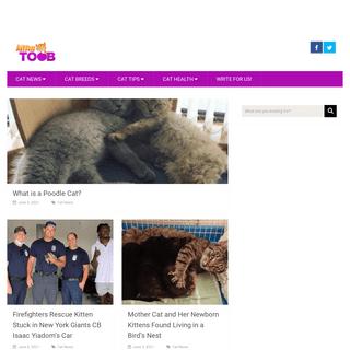 Cat Breeds, Cat Pics, Cat Videos, Cat Tips, LOL Cats - Kittentoob.com