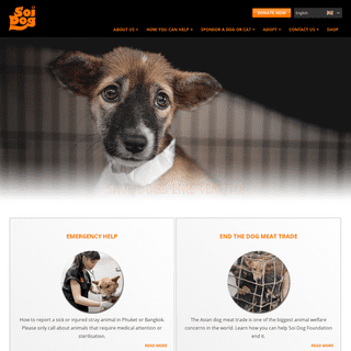 Soi Dog Foundation - Ending The Suffering Of Animals In Asia