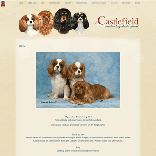 Rasse - Cavalier King Charles Spaniel of Castelfield